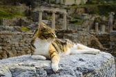 The cat is lying on the ruins — Stock Photo