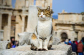 The cat is sitting on the ruins — Stock Photo
