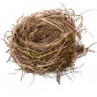 Empty birds nest — Stock Photo