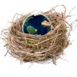World nest — Stock Photo #24684575