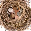 Nest egg — Stock Photo #41543491