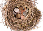Nest egg — Stock Photo