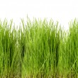 Freshly grown green grass — Stock Photo #51177497