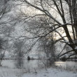 Winter landscape at Havel River (Brandenburg - Germany) — Stock Video