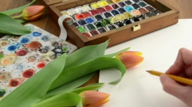 Drawing tulip with a pencil and paint in watercolor painting. Time lapse — Video Stock