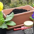 Potting soil accumulate with horn shavings to plant primroses — Stock Video