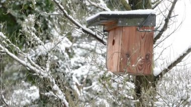 Nest box in winter — Stock Video