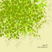 白桦树枝与背景 — 图库矢量图片