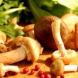 Wild mushrooms. - Stock Photo