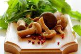 Wild mushrooms. — Stock Photo