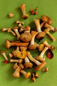 Wild mushrooms — Stock Photo
