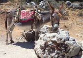 Donkey resting at Crete island in Greece — Stock Photo