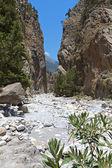 在希腊克里特萨马利亚峡谷 — 图库照片