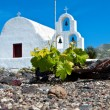 Grape field at Santorini of the Cyclades islands in Greece. — Stock Photo