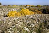 Zona rocciosa del canyon agiti al nord grecia — Foto Stock