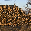 Stock Photo: Woodpile ready for fireplace