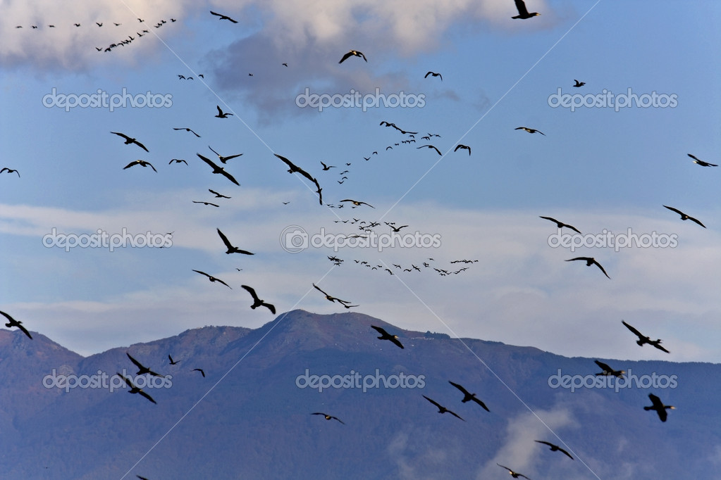 Birds flying to warmer areas for the winter — Stock Photo #13262819