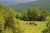 Rustic scenery at Pindos mountains in Europe, Greece — Stock Photo