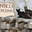 Stock Photo: Cats at Naxos island in Greece