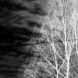 Bare tree — Stockfoto