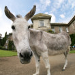 Donkey house - Stock Photo