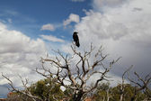 Crow in tree — Stock fotografie