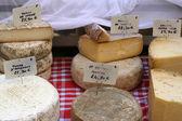Selección de quesos — Foto de Stock