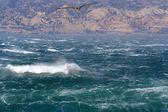 морские птицы — Стоковое фото