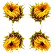 Dying sunflower isolated — Stock Photo #12813702