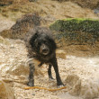 Wet dog - Stockfoto