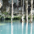 Stock Photo: Mexican Cenote, Sinkhole