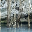 Mexican Cenote, Sinkhole - Stock Photo