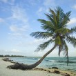 Paradise beach — Stock Photo #13451248
