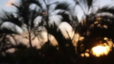 Silhouette of palm trees gently blowing in the wind at sunset, mexico — Stock Video
