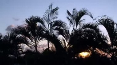 Timelapse silhouette of palm trees gently blowing in the wind at sunset, mexico — Stock Video