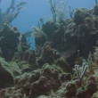 Scuba diving off cozumel island, mexico, one of the world's favourite dive destinations — Stock Video