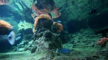Fish in large aquarium — Stock Video
