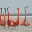 Pink flamingos in the salt lagoons, ria largartos, mexico — Stock Video #16982791