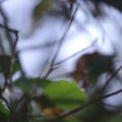Changing the focus of the lens in a rainforest to reveal different depths of vegetation  — Stockvideo