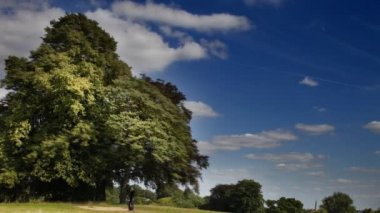 Large trees and cloud timelapse in hampstead heath, london — Stock Video