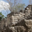 Time-lapse of the mayan ruins at kalakmul mexico — Stock Video