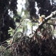 The amazing monarch butterfly sanctuary in mexico — Stock Video #18008001