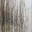 Reeds moving in river water — Stock Video #18550217