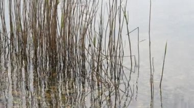 Reeds moving in river water — Stock Video