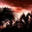 Stock Video: Timelapse of sunlight shining through palm trees at sunset
