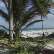 Stock Video: Paradise beach, mexican caribbean coast