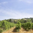 Stock Video: Vineyard in france