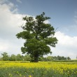 Beautiful tree — Stockfoto