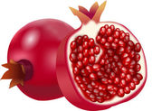 Pomegranate — Vector de stock