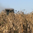 Stock Video: Combine Harvesting Corn